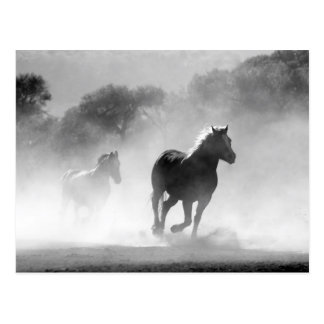 Horses running black and white beautiful scenery postcard