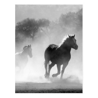 Horses running black and white beautiful scenery postcards