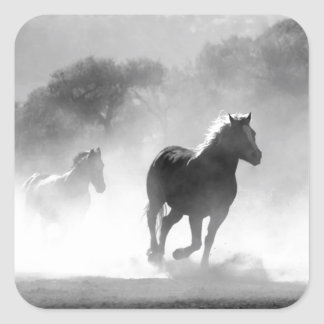 Horses running black and white beautiful scenery sticker