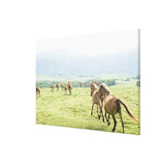 Horses running canvas print
