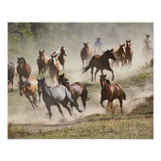 Horses running during roundup, Montana Poster