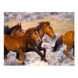 Horses running post card