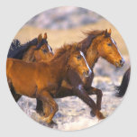 Horses running round sticker
