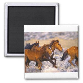 Horses running square magnet