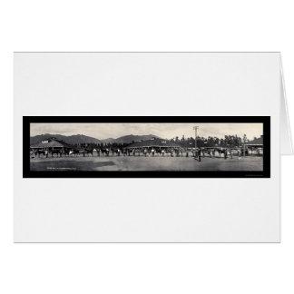 Horses Santa Anita Photo 1908 Cards