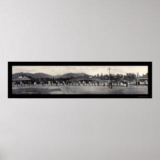 Horses Santa Anita Photo 1908 Print