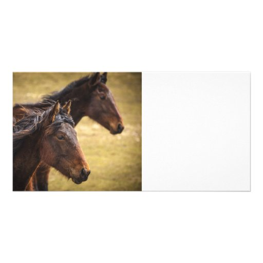 Horses Side By Side Photo Card Template