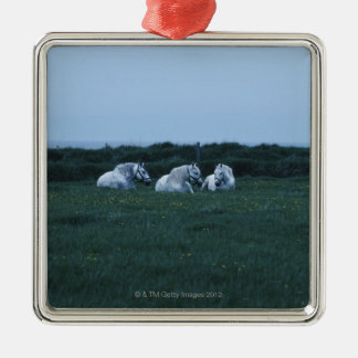 Horses sitting in field, Perci, Quebec, Canada Christmas Ornament