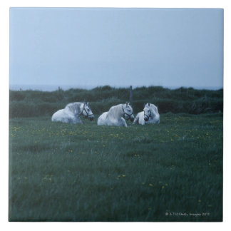 Horses sitting in field, Perci, Quebec, Canada Large Square Tile