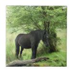 HORSES SMALL SQUARE TILE