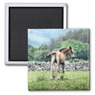 HORSES SQUARE MAGNET