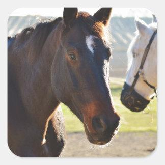 Horses Square Sticker
