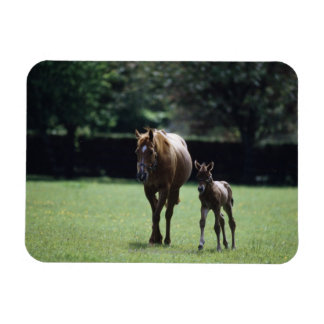 Horses - Thoroughbred, Mare And Foal, Magnet