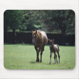Horses - Thoroughbred, Mare And Foal, Mouse Mat