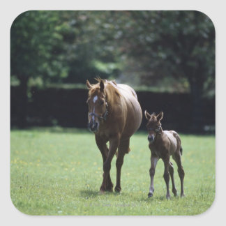 Horses - Thoroughbred, Mare And Foal, Stickers