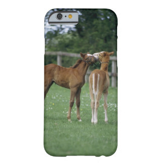 Horses - Thoroughbreds, Foals, Barely There iPhone 6 Case
