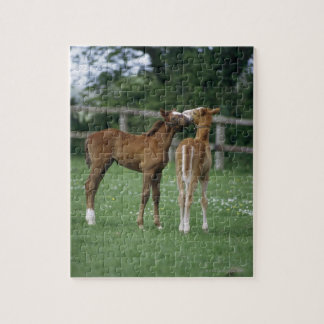 Horses - Thoroughbreds, Foals, Jigsaw Puzzle