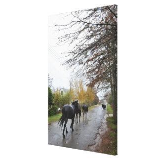 Horses walking down Oak Street in rain, Greyton, Canvas Print