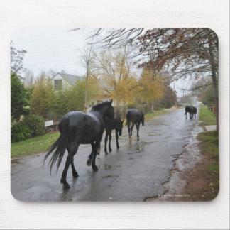 Horses walking down Oak Street in rain, Greyton, Mouse Pad