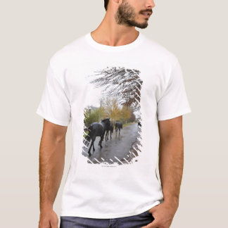 Horses walking down Oak Street in rain, Greyton, T-Shirt