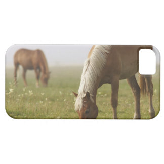 horses wildflower meadow morning mist Piano Barely There iPhone 5 Case