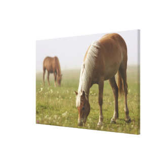 horses wildflower meadow morning mist Piano Gallery Wrapped Canvas