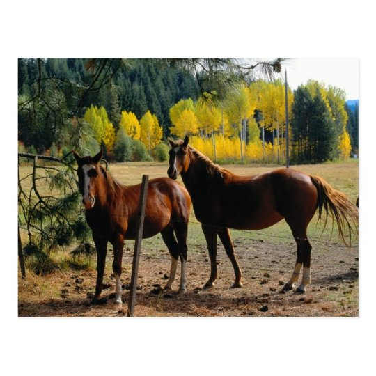 Horses with Yellow Trees Postcard