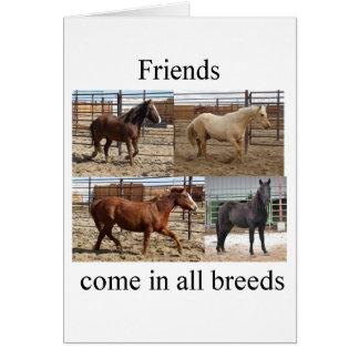 HorsesBreeds1.tif Greeting Card
