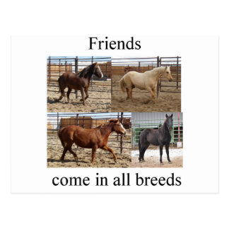 HorsesBreeds1.tif Postcard