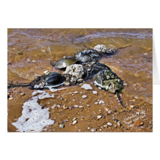 Horseshoe Crab Greeting Card - Inside Blank