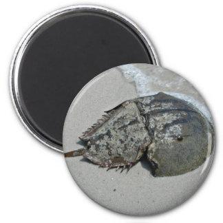 Horseshoe Crab - male 6 Cm Round Magnet