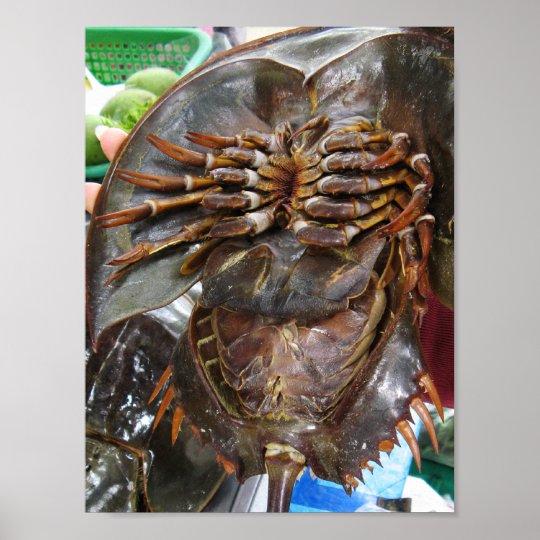Horseshoe Crab ... Thai Asian Street Food Poster
