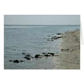 Horseshoe Crabs along beach Card