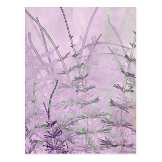 Horsetail Grass/Stems Postcard