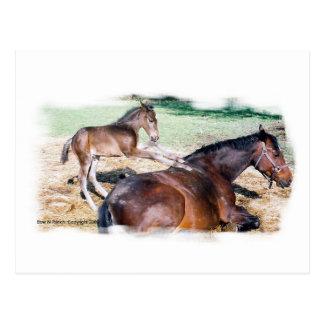 Horsey Humor, Saying Grace Post Card