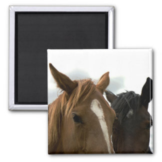 horsey love magnet
