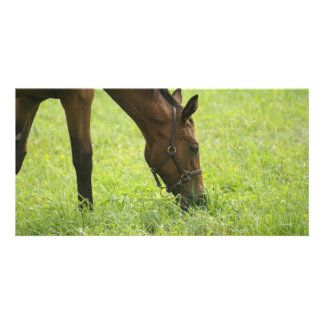 Horsing Around Personalized Photo Card