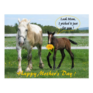 Horsy Mother s Day Postcard