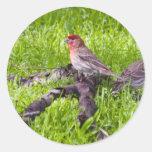 Hosse Finch Classic Round Sticker