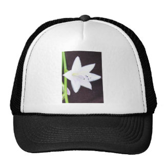 Hosta Bloom Hat