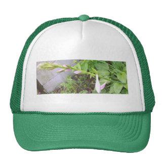 Hosta Buds Hats