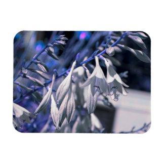 Hosta in purple and blue hue magnet