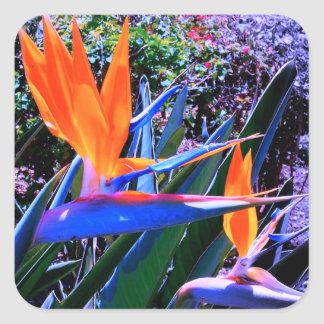 Hot Colors Bird-of-Paradise Square Sticker