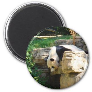 Hot Panda 6 Cm Round Magnet