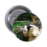 Hot Panda Buttons