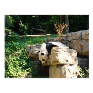 Hot Panda Postcard
