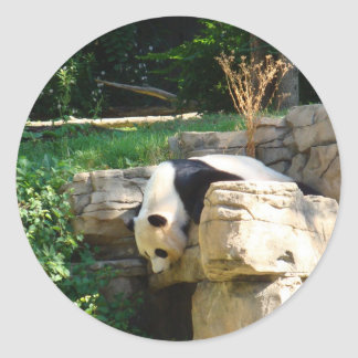 Hot Panda Round Sticker
