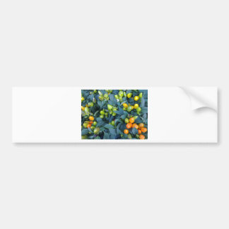 Hot Peppers Plant Bumper Sticker
