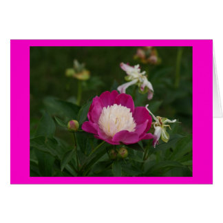 Hot Pink and White Peony.jpg Card