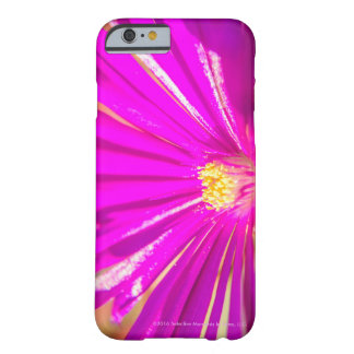 Hot-Pink Arctotis Flower With Yellow Heart Barely There iPhone 6 Case
